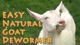 At Home Natural Goat DeWormer Goat Basics 101