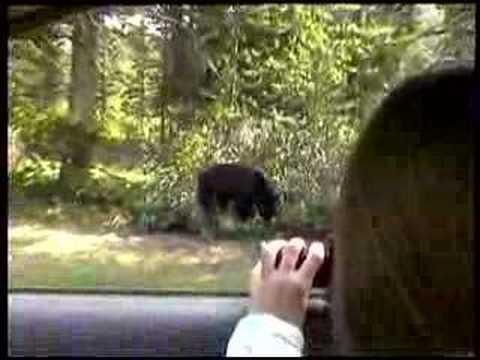 Black Bear Lake Louise Alberta Canada Youtube