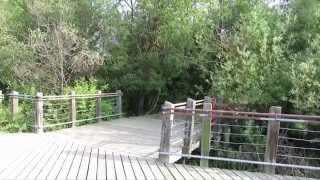 Sounds Of Birds And Wildlife At The Reservoir In Grande Prairie, Video 1