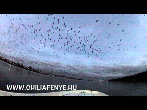 Duna Delta madár világ, Danube Delta ornithology,