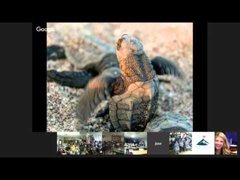 José Urteaga: ProtectingSea Turtles