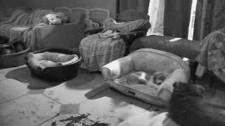 Senior Dog Gathering Room Cam 02-19-2018 01:12:02 - 02:12:03