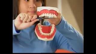 貝氏刷牙法:快樂潔牙,健康無瑕
