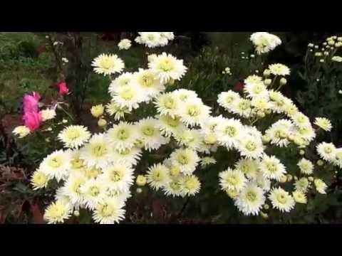 Поздние цветы (2011) - смотреть онлайн