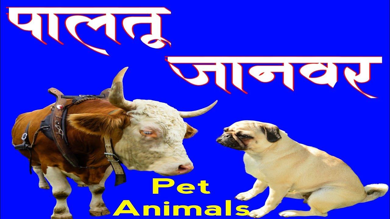 पालतू जानवर के नाम-Paltu Janwar ke naam (By Kya Karoon)
