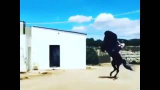 اغنية حلوه وبنت اروع على حصان