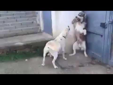 Father and mother Dogs Fight cz Baby crying - WhatsApp Trends