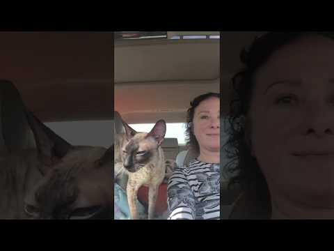 Traveling with Cornish Rex's