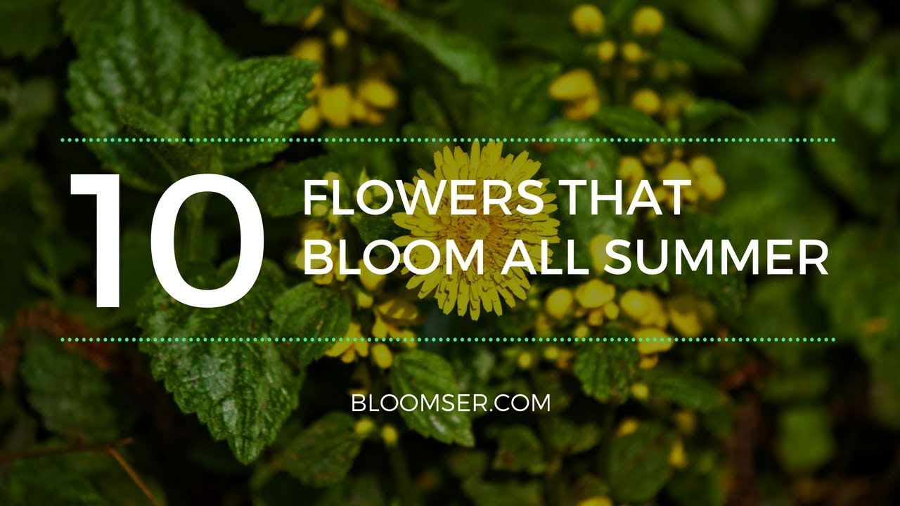 10 Adorable Perennial Flowers That Bloom All Summer Youtube