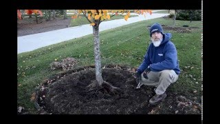 Performing a Root Excavation with Bruce our Good Nature Arborist