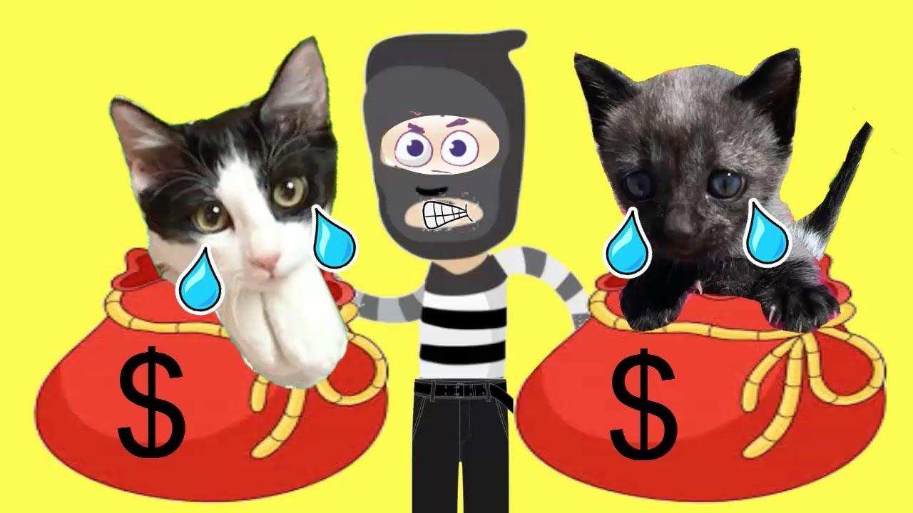 Ladrón me roba a mis gatos chistosos Luna y Estrella y le hacen bromas en casa / Videos de gatitos