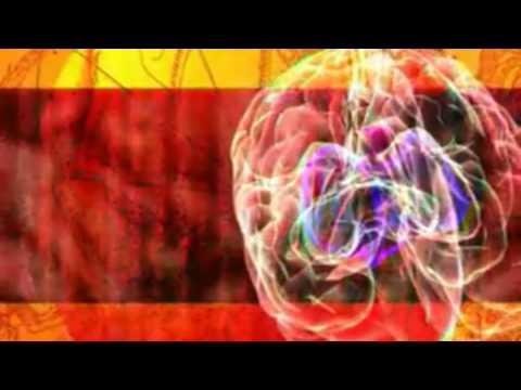 Das Gehirn - [W] wie Wissen