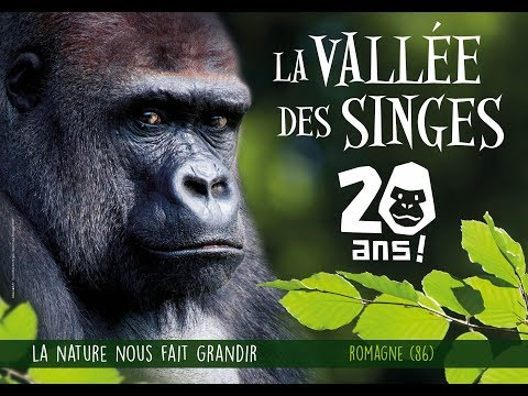 2018 : les 20 ans de la Vallée des Singes