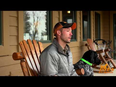 Best Ways To Feed A Hunting Dog