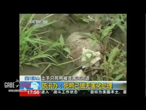 THOUSAND DEAD DUCKS IN CHINA MARCH 29, 2013