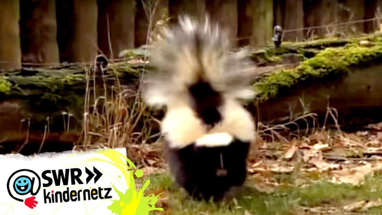Frohe Weihnachten Du Widerliches Stinktier.Stinktier Cinemapichollu