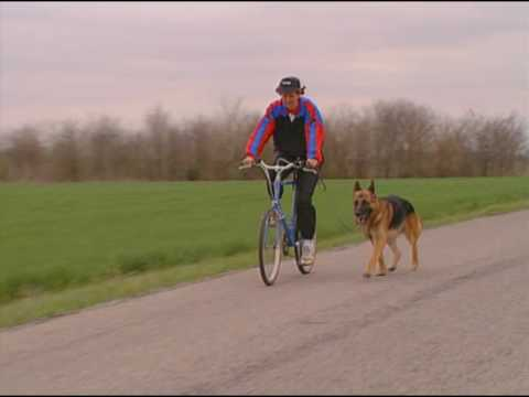 The German Shepherd Dog the German Way 4- Advanced Training, Conditioning and Handling