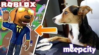ROBLOX-🐶 ¡ MI PERRO juega um ROBLOX y entra uma cidade MEEP! -Encenação