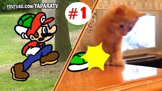 Funny animals - Cats and dogs fail compilation - Super Mario Bros