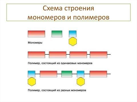 Типы структурных звеньев полимеров.