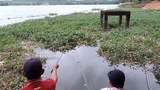 mê câu cá | khi 2 thánh đi câu cá to bằng cần câu tí hon | và cái kết nằm ngoài dự đoán