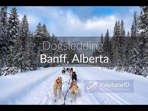 Dog Sledding Banff, National Park - Alberta