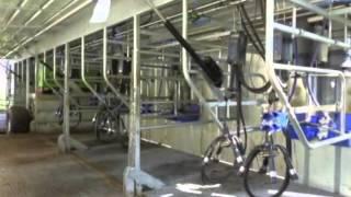 Une salle de traite ambulante sur caillebotis intégral (La France Agricole)