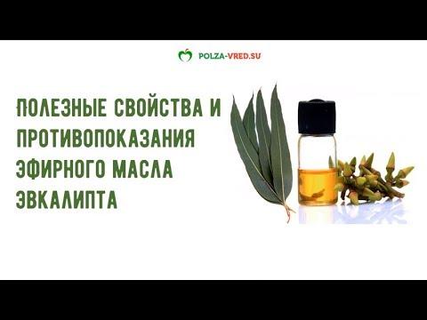 Масло эвкалипта польза и противопоказания