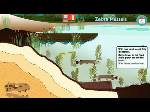 Impacts Of Zebra Mussels