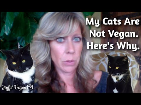Vegan with Cats (and Dogs): What to Feed our Companion Animals