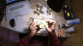 Как не надо прививать кактус?