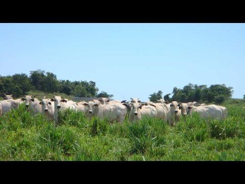 Curso Planejamento Alimentar em Sistema de Pastejo - Para Gado de Leite e Corte
