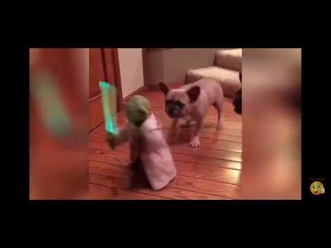 Смешные кошки 2019 Новые приколы с котами до слёз, смешные коты приколы 2019 funny cats animals #80
