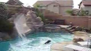 Funny Dog Swimming