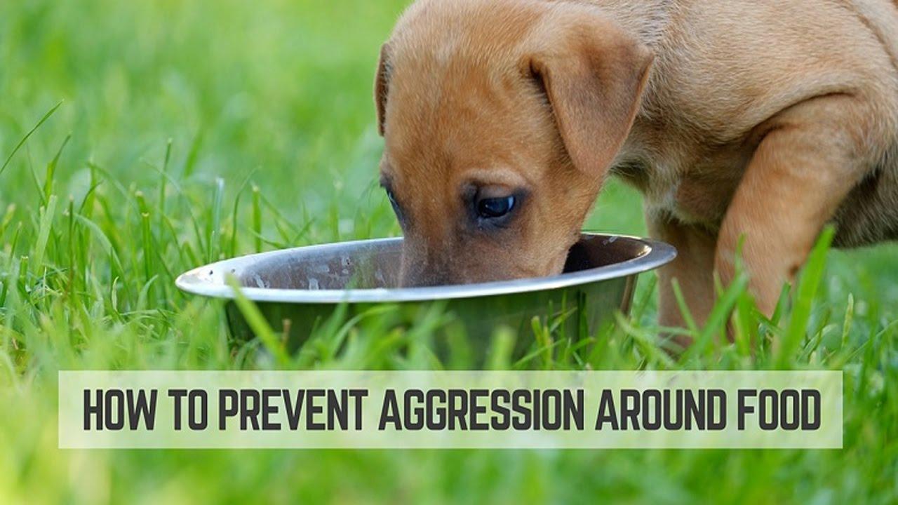 Dog Food Aggression Around the food bowl   Easy way to ...