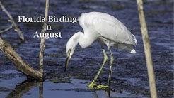 Florida Birding in August