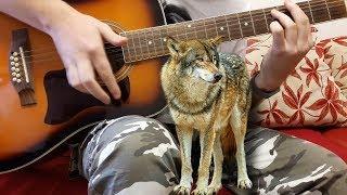 Песня под гитару Одинокий волк ХОРОШАЯ ПЕСНЯ