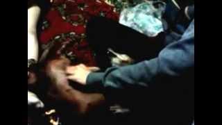 Собака гладить хотеяка) Клёвая собака) Зачет