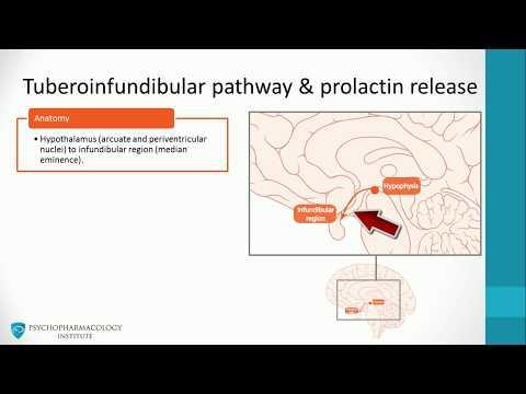 How the Dopaminergic Pathways is Key to Motivation & Reward