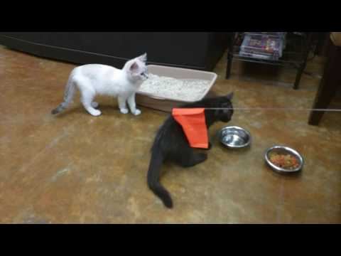 Cute kittens playing and having fun (1:35)