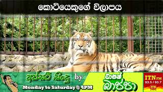 Kotiyage Wilapaya - Upset Songs By Tarsan Bappa