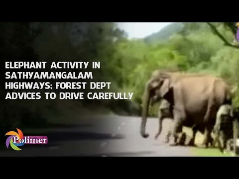 Elephant frequently crosses Sathyamangalam highways; Forest department advices to drive carefully