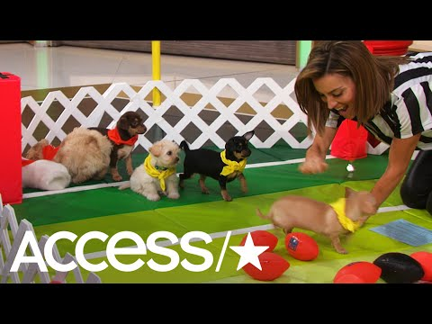 'Puppy Bowl XIV': Meet The Adorable All-Stars! | Access