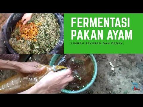 Tips Ramuan Herbal Penambah Berat Badan Ayam Broiler dengan Wortel