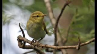 птичий концерт в лесу