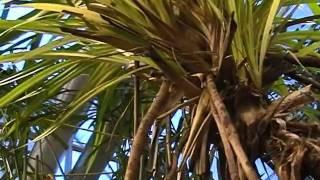 Видообразование корней
