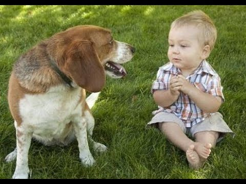 Funniest Babies and Dogs Talking to each other – Cute dog and baby videos 2017