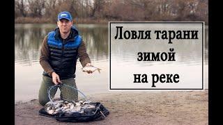 Ловля тарани зимой на реке