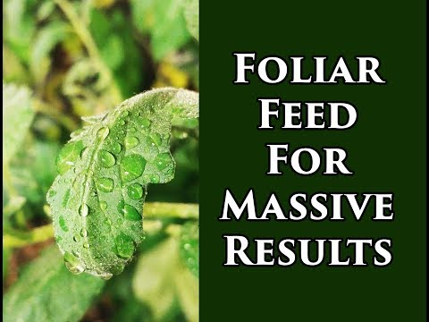 Foliar Feeding Vegetable Plants For Insane Yields (2018)