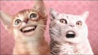 Ozone Cats-Miah ha hi :D